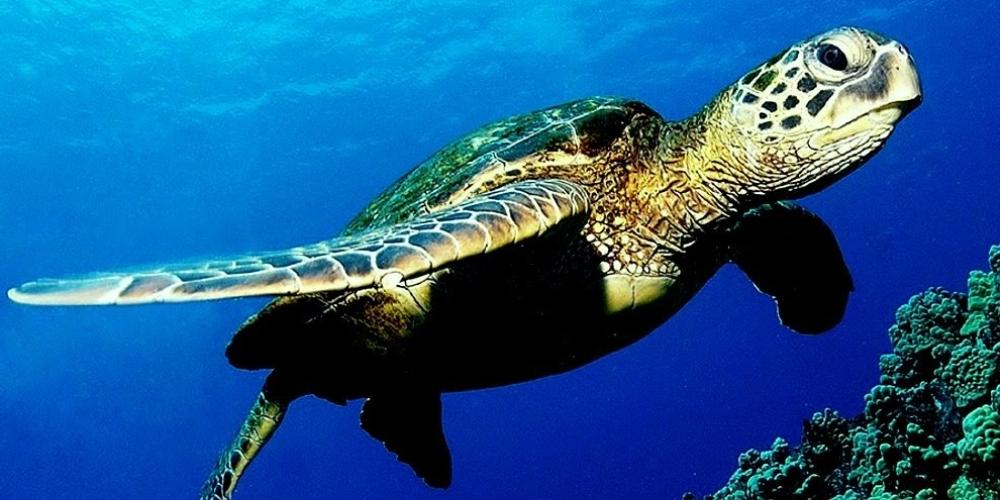 dauphins-et-tortues-en-martinique-5-endroits-ou-les-voir-mer
