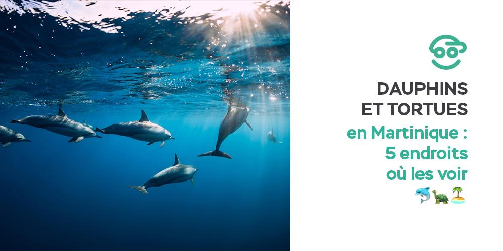 dauphins-et-tortues-en-martinique-5-endroits-ou-les-voir
