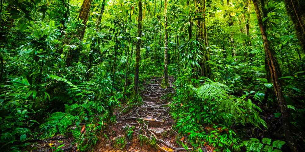 Forêt Guadeloupe
