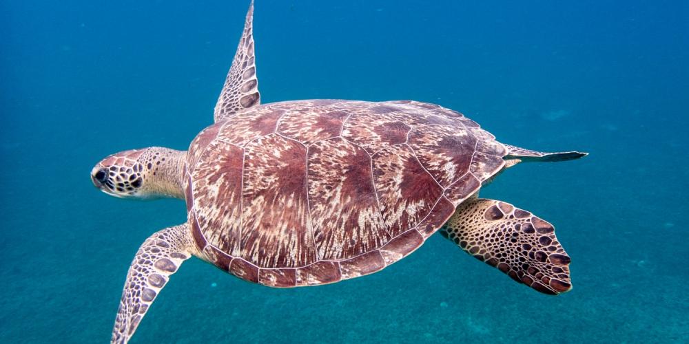 martinique-visite-hors-saison-mai-decouverte-tortues-marines