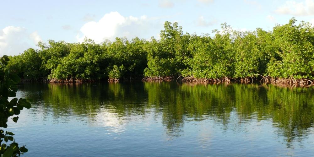 randonnee guadeloupe mangrove