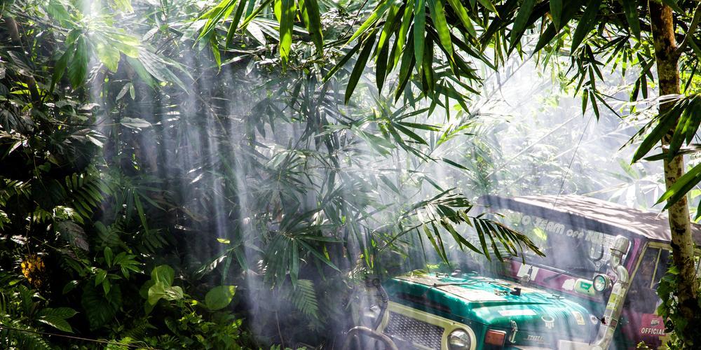 jungle guadeloupéenne