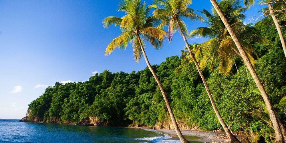 zotcar plus belle plage martinique anse couleuvre